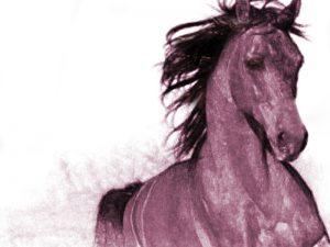 Ανέβα στο άλογό σου