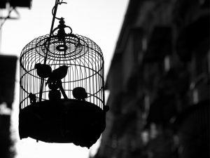 Τα κλουβιά με τα «πρέπει»
